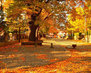 autumn-fall-park-leaves-colors-osen-listva-park-derevia-tree